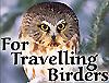 Travelling Birders